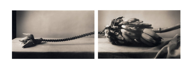 Bananas (Diptych)
