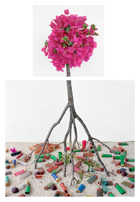 Bougainvillea & Shotgun Shells, 2017