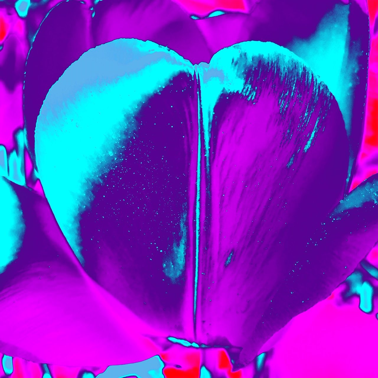 James Lahey - Tulips as My Heart in the Universe (Purple)
