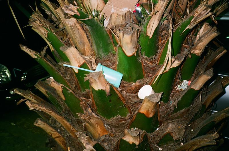 gobelet bleu et palmier vert - mex.jpg