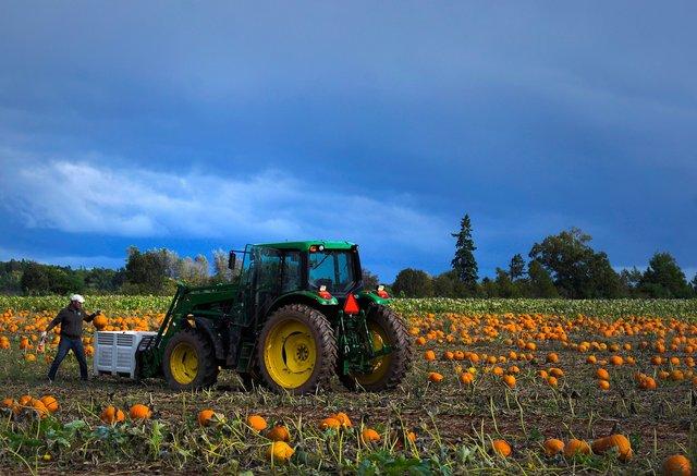 pumpkin2NR.jpg