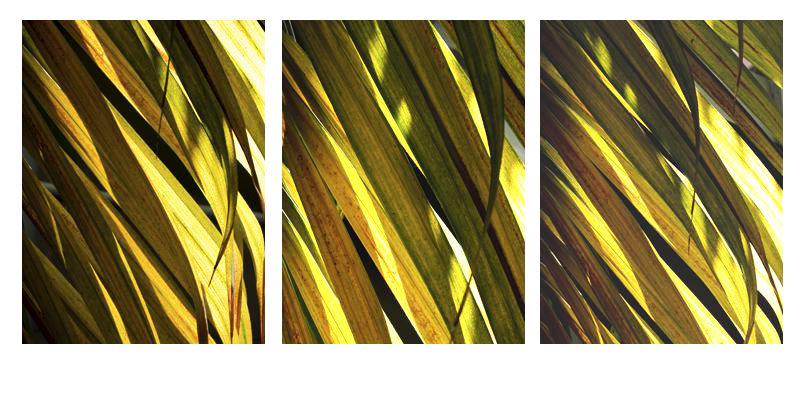 0026_Triptych16.JPG