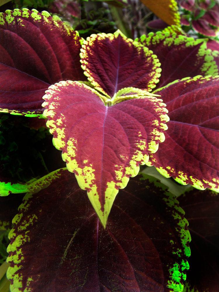 0022_130_3059Bests Valentine.JPG