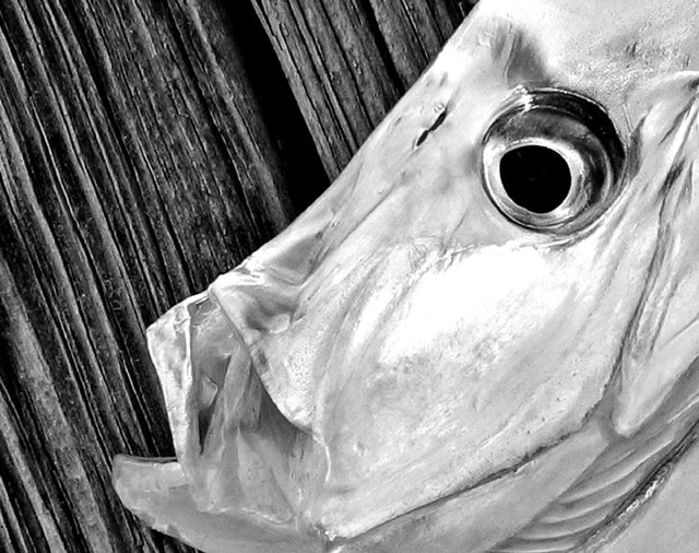 0001_134_3434Look Down Best full B&W Close Up.JPG