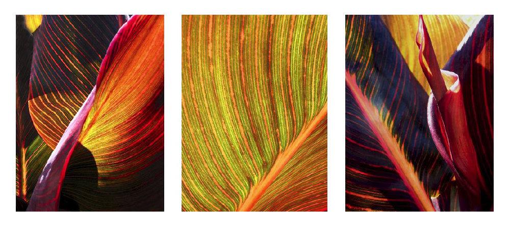 0035_Triptych25.JPG