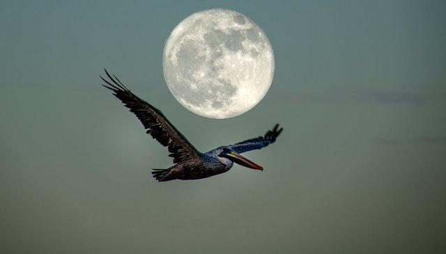 0084_IMG_7596With Moon.JPG