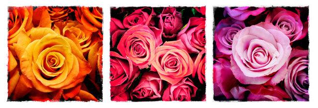 0042_Rockin Roses 1Triptych.JPG