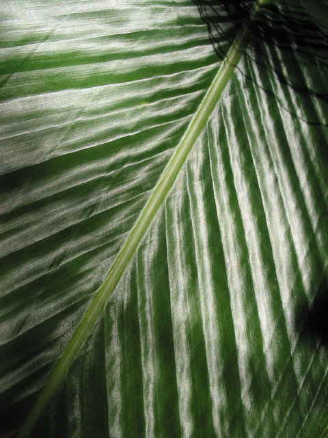 0039_Best Palm Leaf.JPG