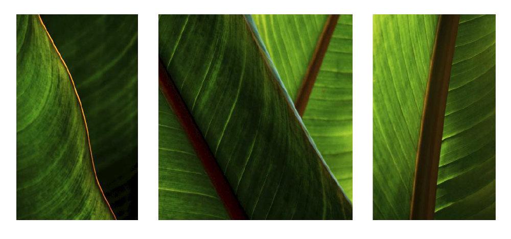 0005_Triptych30.JPG