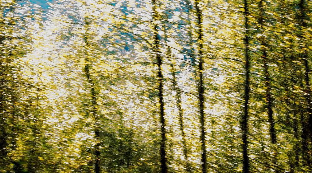 """0030_Skykomish Fall 50""""wide.JPG"""