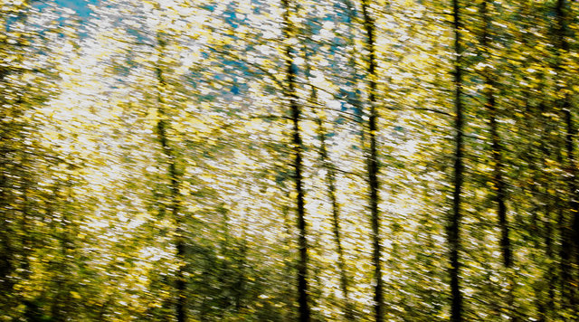 "0030_Skykomish Fall 50""wide.JPG"