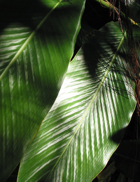 0040_Best Palm Leaves.JPG
