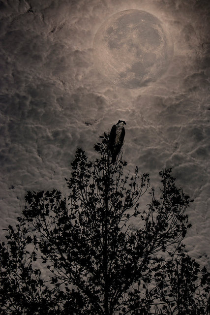 0035_IMG_9632OspryMoon.JPG