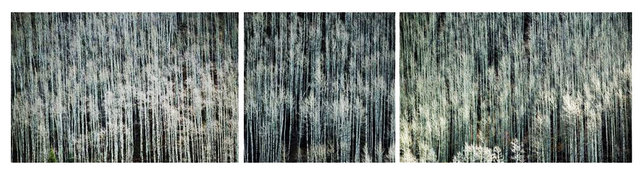0025_Triptych15.JPG