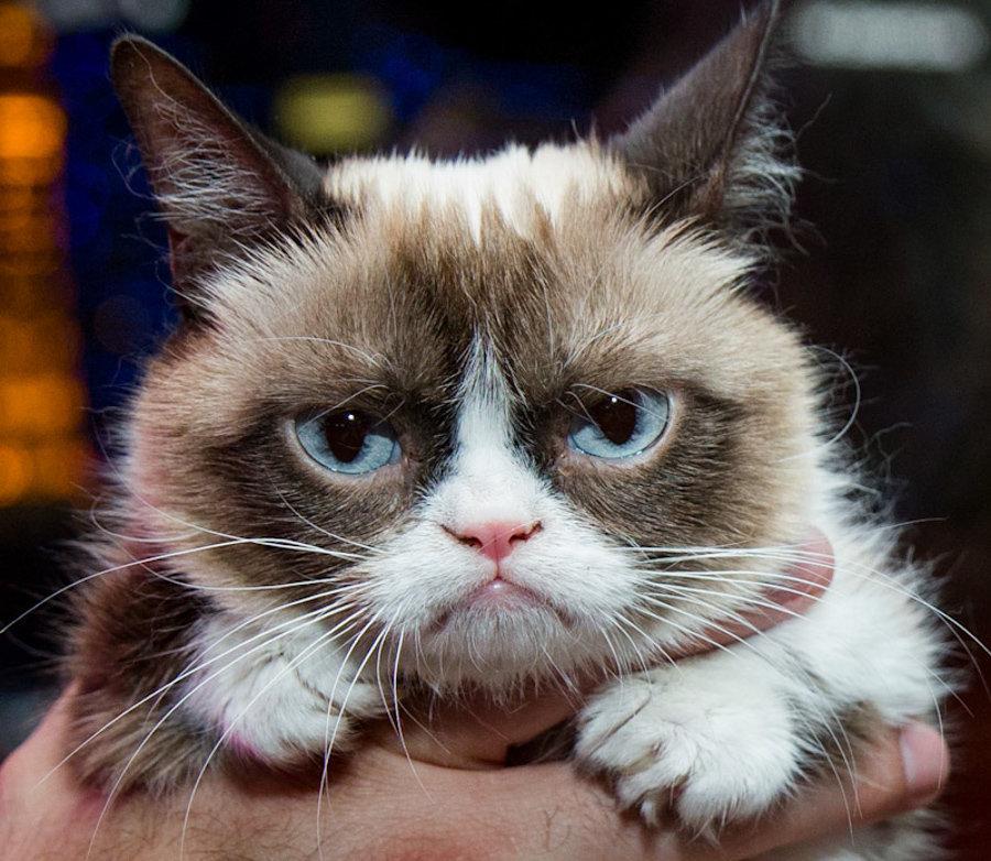 8_5_14_grumpy_cat_kabik-68-2.jpg