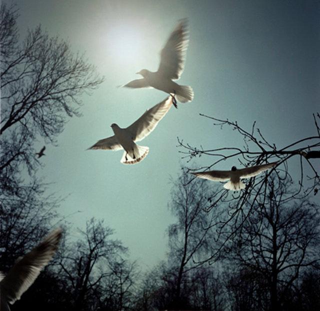 birds 2 25x25 72dpi.jpg