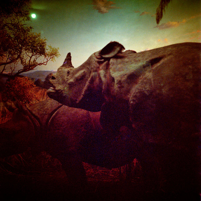 DanielleCeliePhotography-Once-2-Rhino.jpg