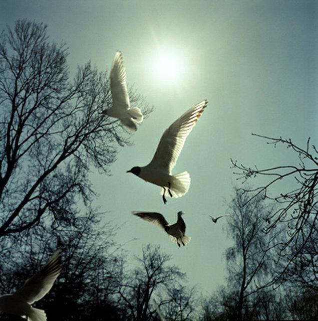 birds 1 25x25 72dpi.jpg