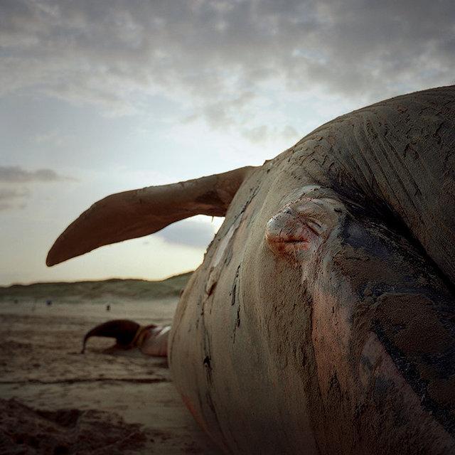 Danielle Celie Photography First Oil adventure 14.Whale 25x25 72 dpi.jpg