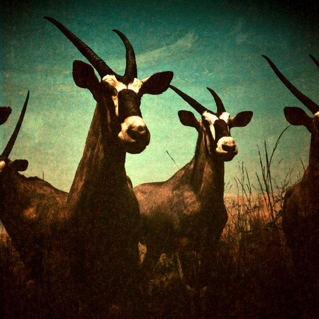 DanielleCeliePhotography-Once-7-Oryx.jpg