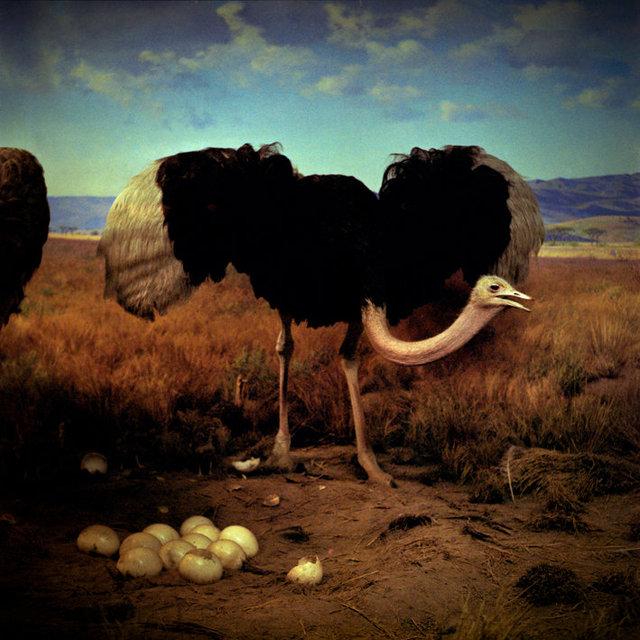 DanielleCeliePhotography-Once-3-Ostrich.jpg