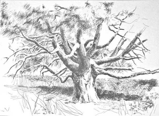Stare drzewo 2006 tusz karton