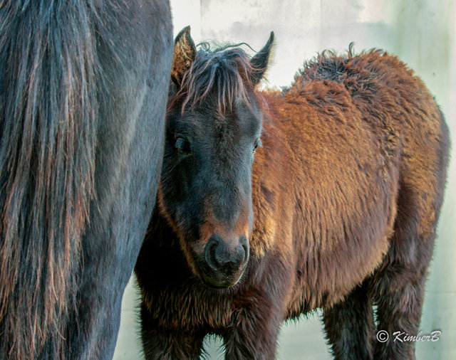 the foal-4.jpg
