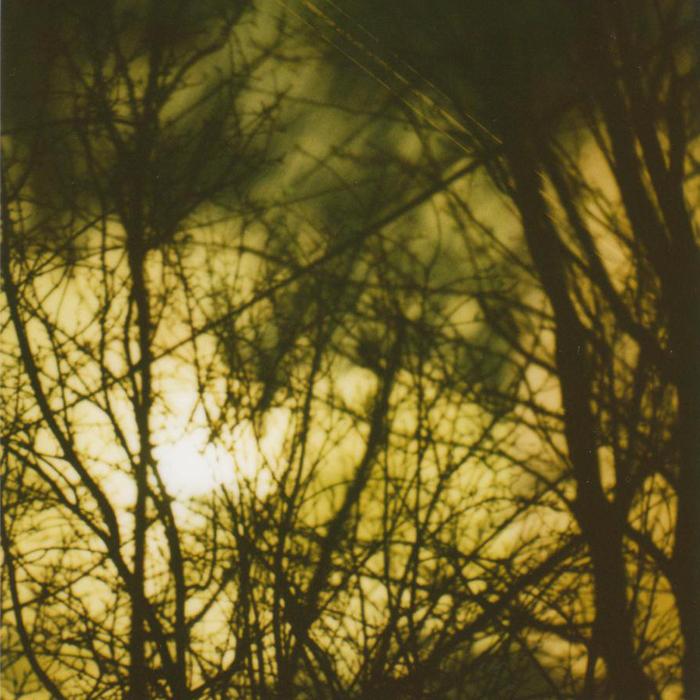 treewebmoon.jpg