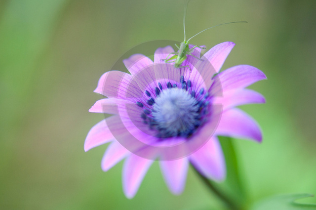 Pflanzen_Copyright_471.jpg