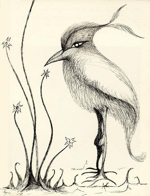 Elegant Bird