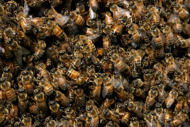 BeesCloser.jpg