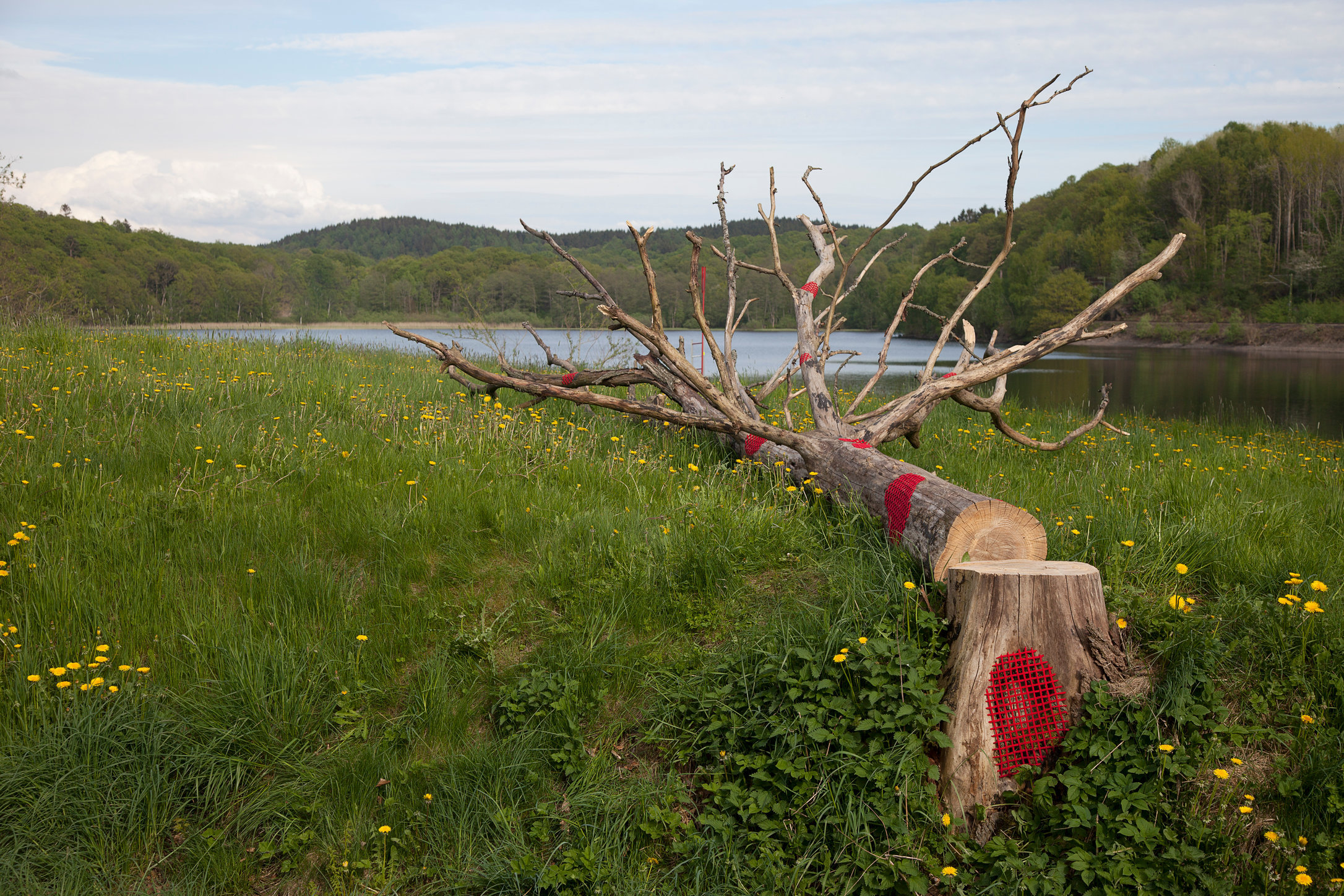 For the exhibition Gothenburg Green World mended dead tree with yarn. Mölndal, Sweden 2016.
