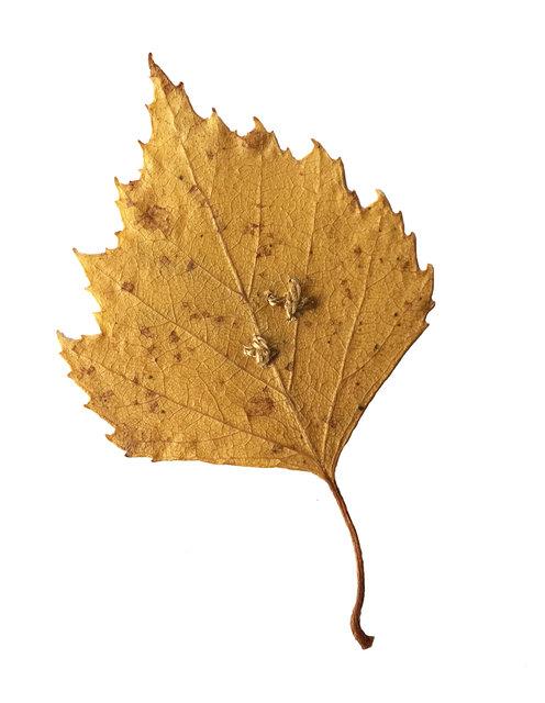 Mended leaves
