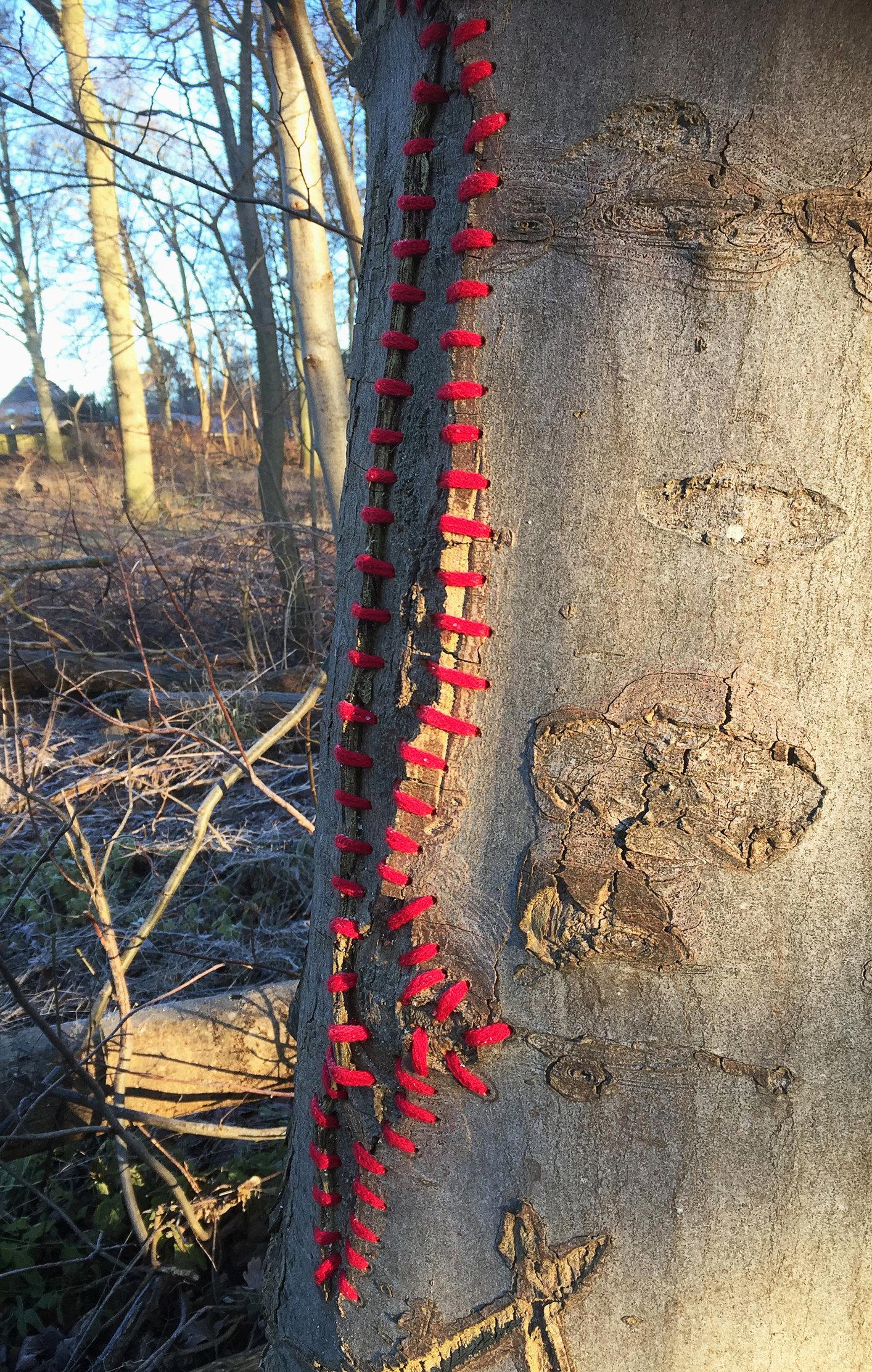 Mended tree, Skoven (DK)