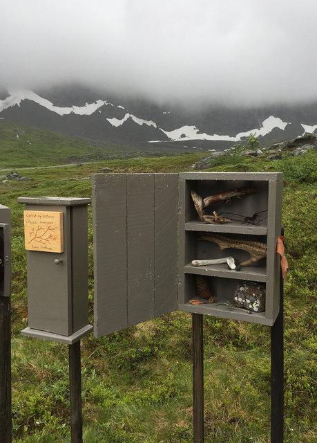 Cabinet of natural (Rauma) memories, 2017