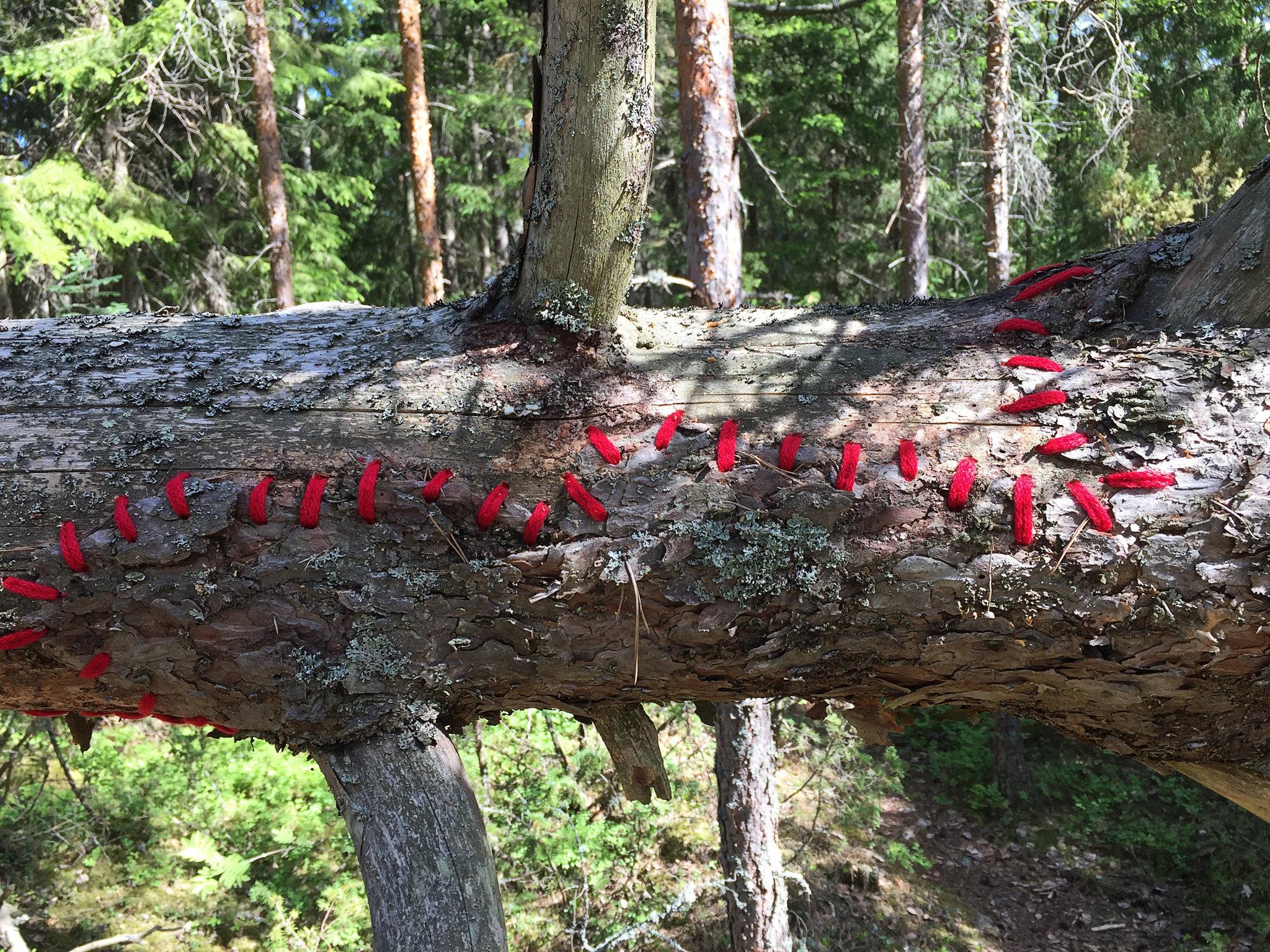 Mended fallen tree