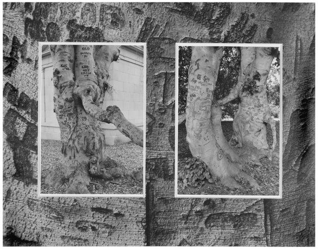 Trees  28.jpg