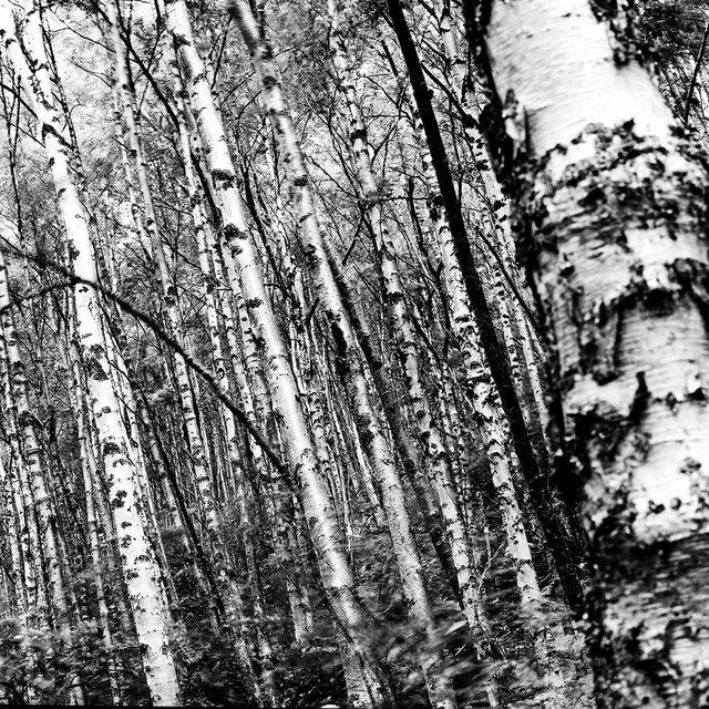 0002_birch.tif