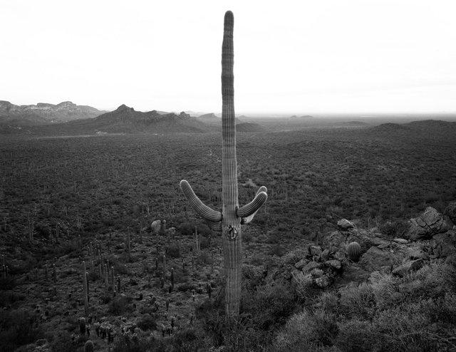 Saguaro-Weavers Needle Web3.tif