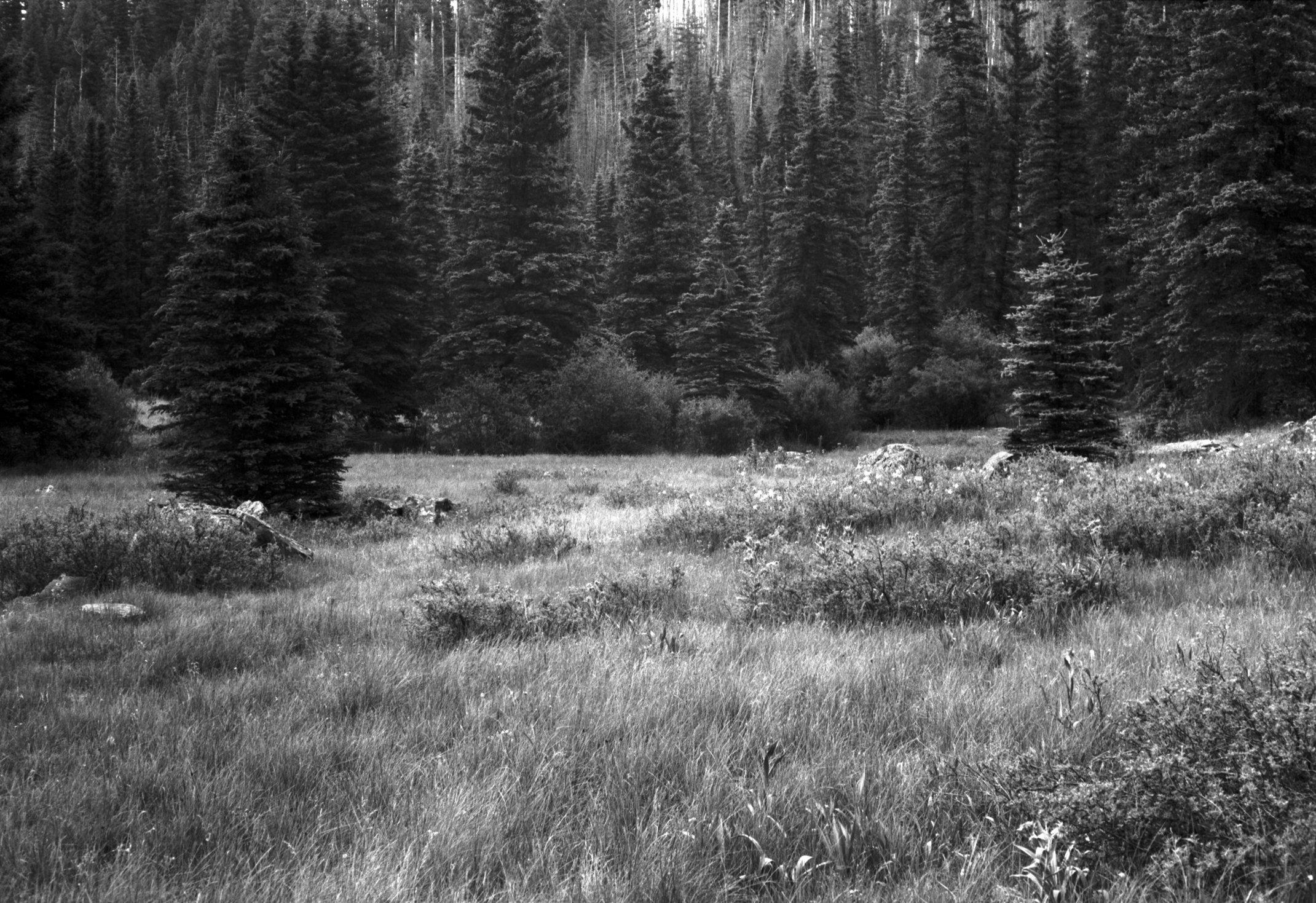 White Mountains, AZ. July 2016 #29.tif