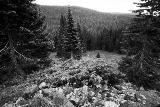 0006_Bowen Parika Mountains, Colorado, Summer 2015. Scan #12.tif