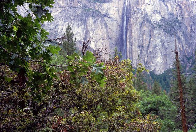 Sierra Nevada's, Yosemite. Summer 2016. (16).tif