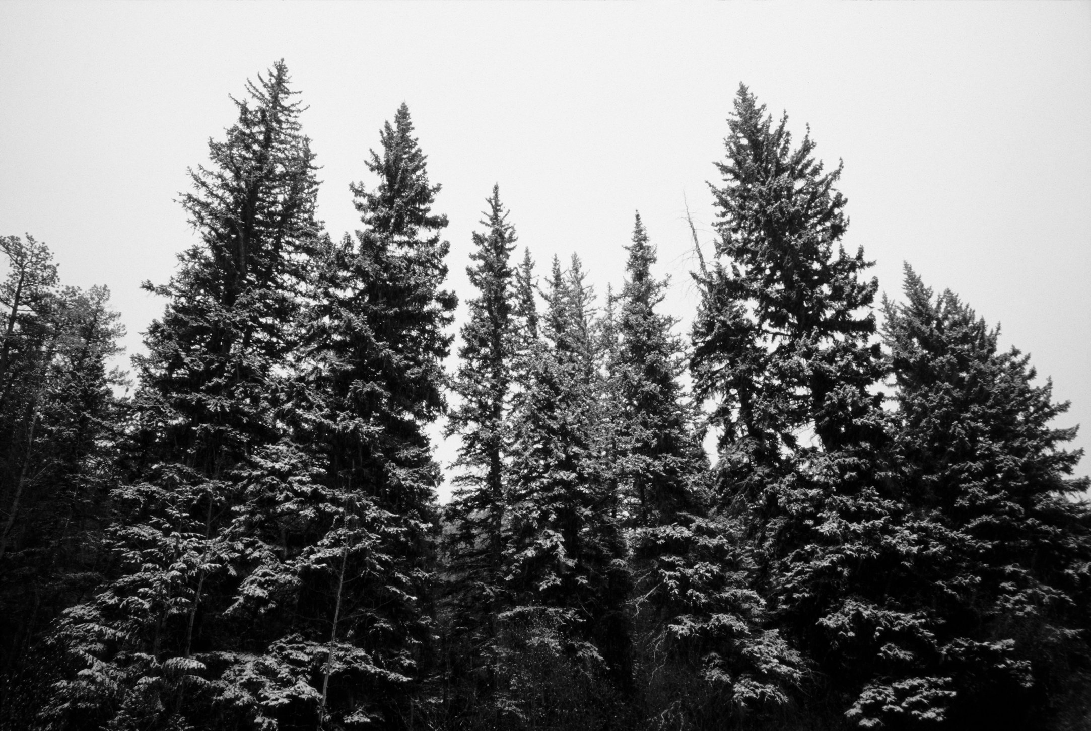 0002_Northern Rockies, Spring 2015. Scan #12.tif