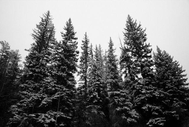 0002_Northern Rockies, Spring 2015. Scan #12.tif