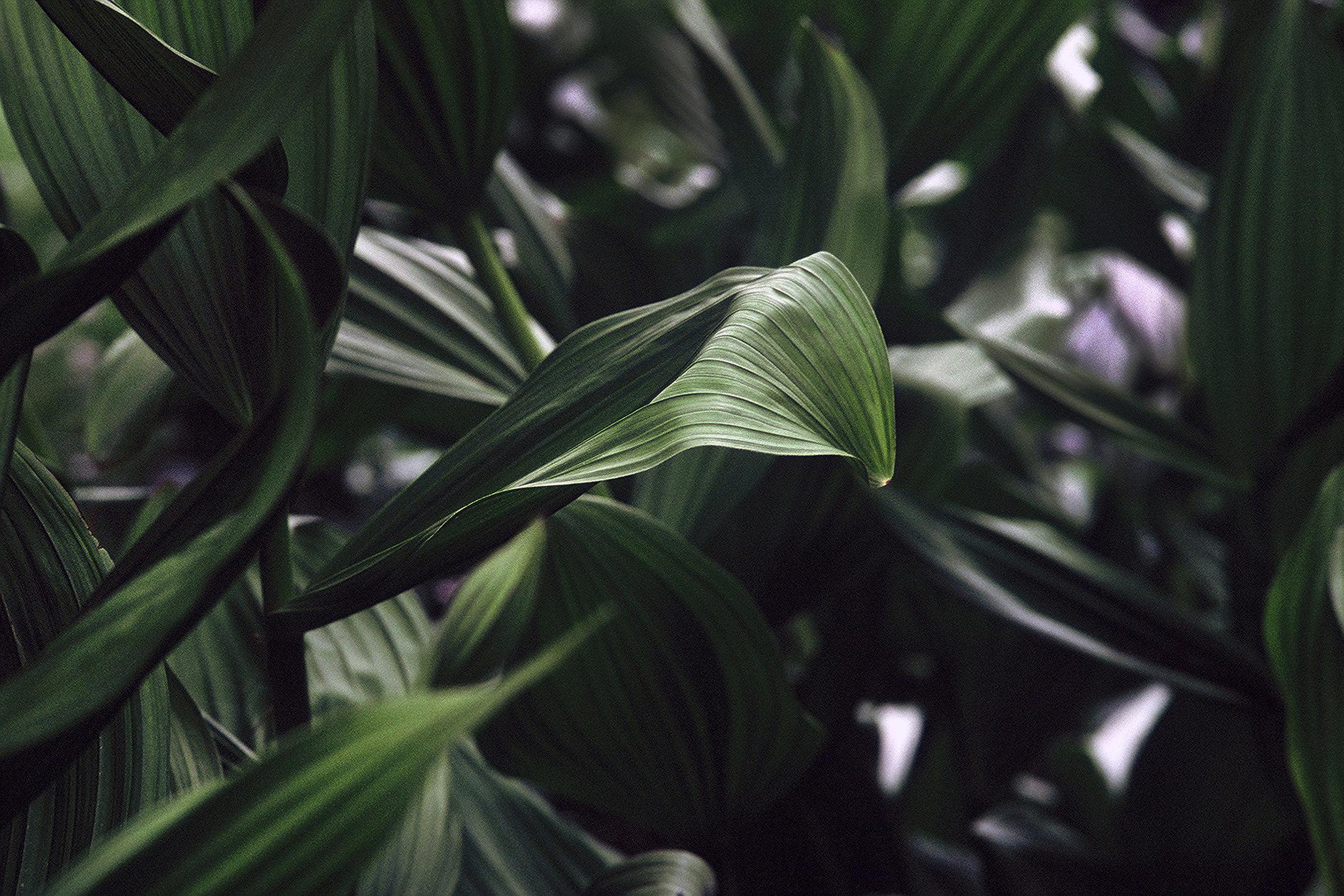 0001_leaves.tif