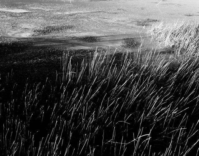 Reeds and Mary, Flagstaff, Arizona, 2011(1).jpg