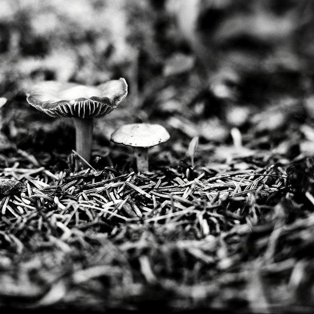0007_mushrooms.tif