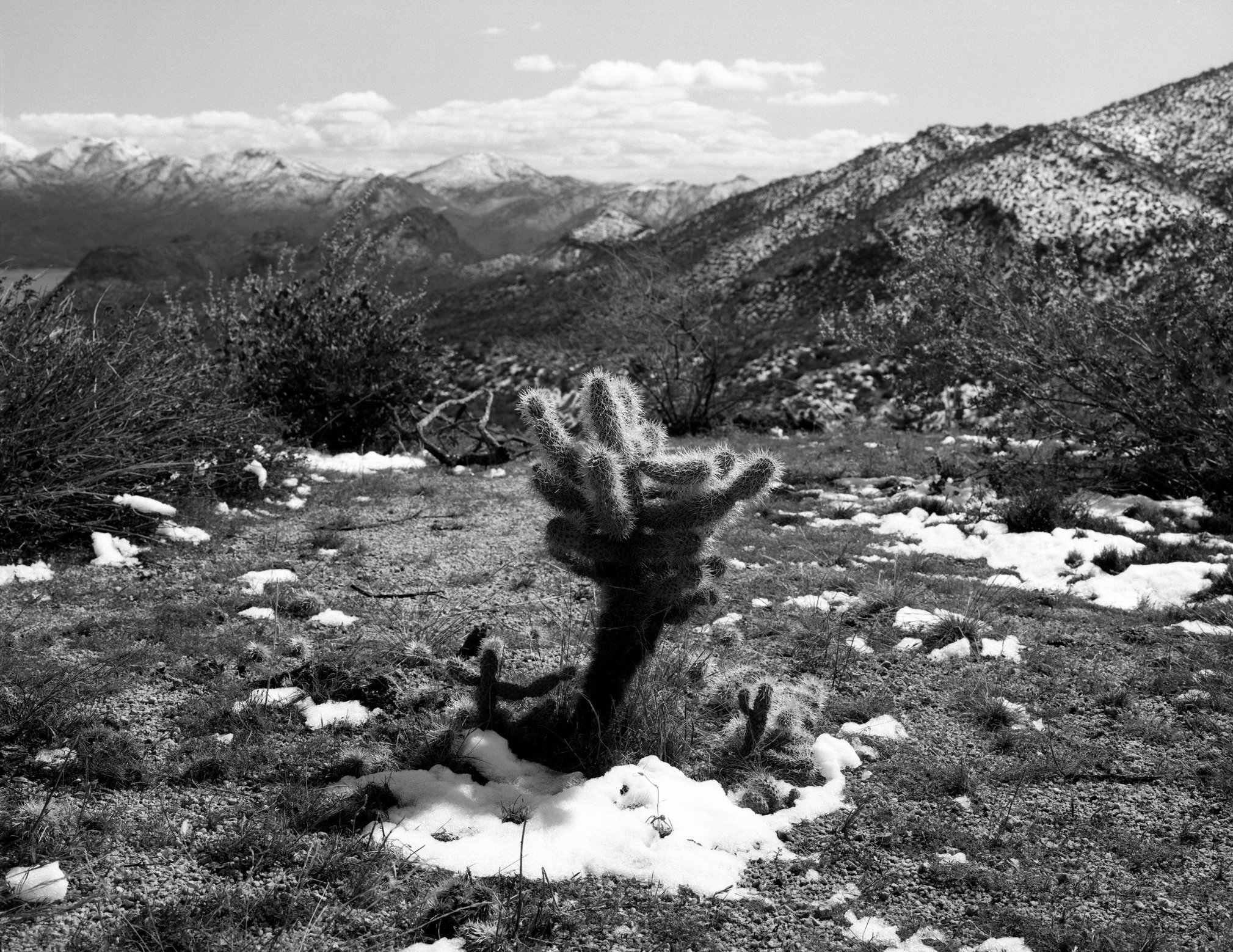 Cholla after snow - web.tif