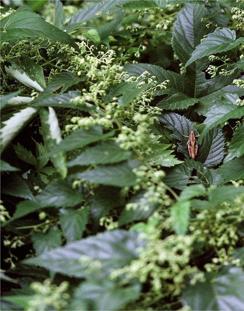 0004_grasshopper.tif