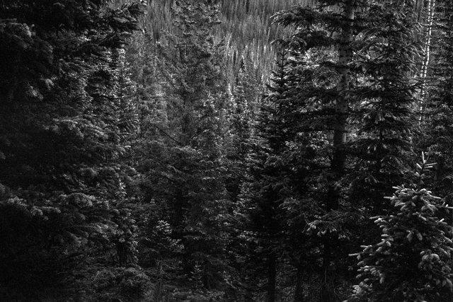 0004_Bowen Parika Mountains, Colorado, Summer 2015. Scan #13.tif